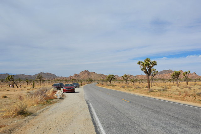 Park Boulevard flanked by Joshua trees