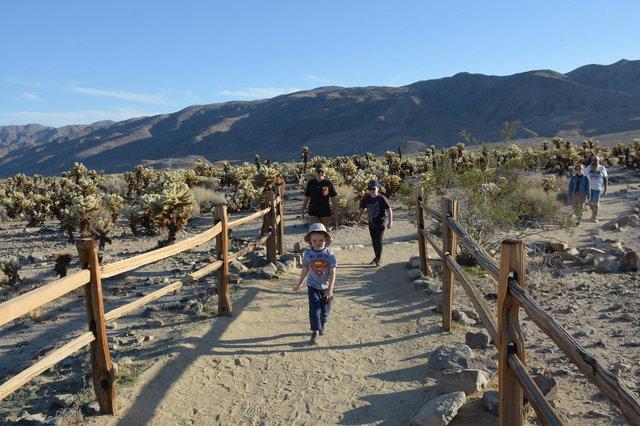Julian, Sharon, and Calvin walk through the cholla cactus garden