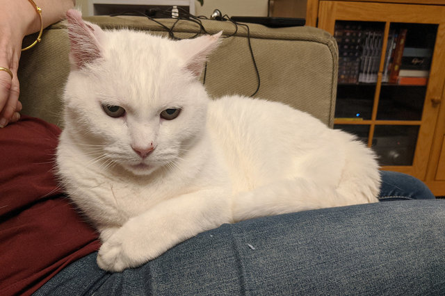 Willow sits on Kiesa's lap