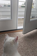 Willow looks out at the rain