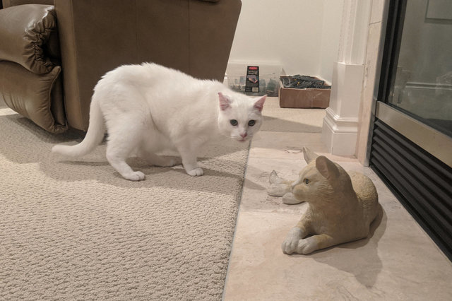Willow is not sure what to make of the cat statue at Grandma's house