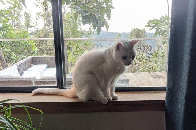 Willow on the windowsill
