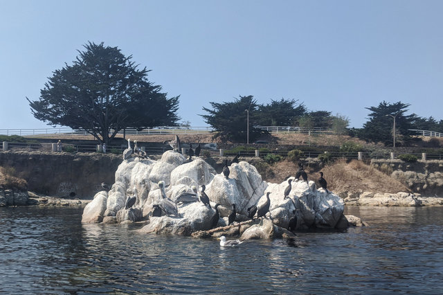 Birds on a rock in Monterey Harbor