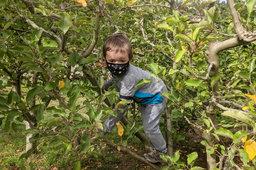 Julian climbs an apple tree