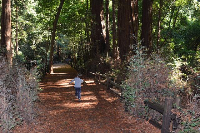 Julian runs down the Redwood Grove trail