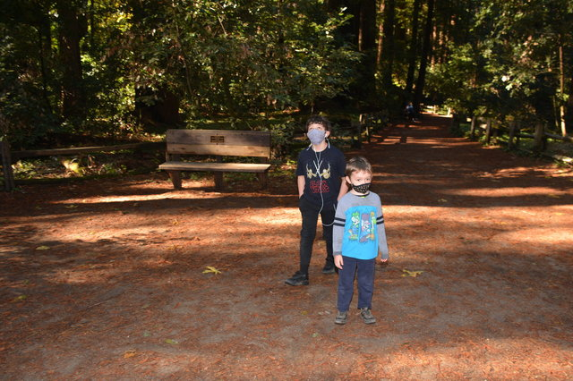 Calvin and Julian look up at redwood trees