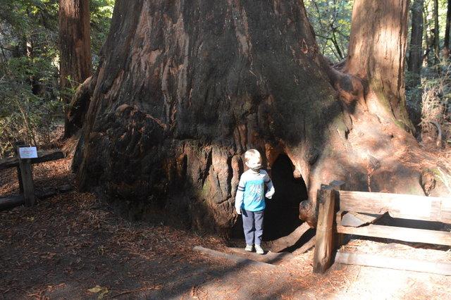 Julian outside the Fremont Tree