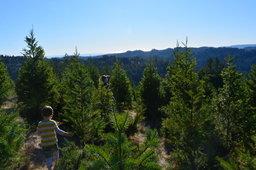 Julian follows Kiesa through Summit Tree Farm