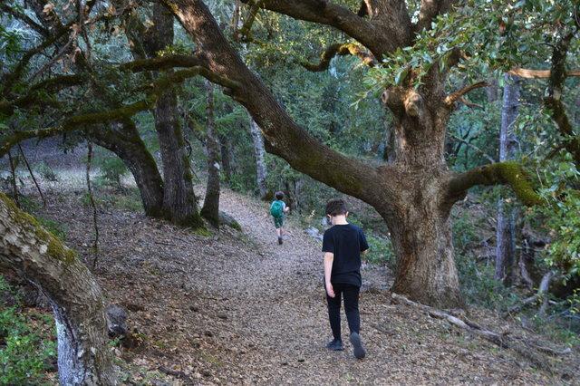 Calvin follows Julian on the San Andreas Fault Trail