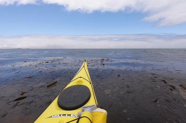 Kayak over a kelp forest