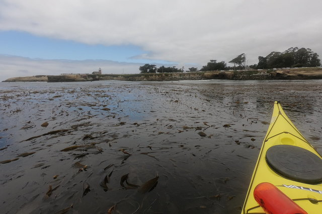 Kayaking in the kelp beds below Lighthouse Point