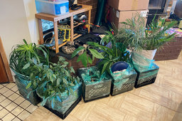 Plants packed and ready to move