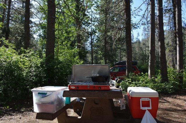 Cottonwood fluff falling over campsite