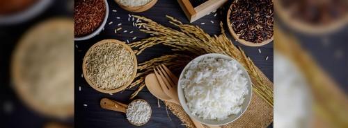 Rice Farm Investment