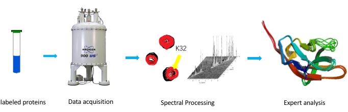 Workflow for protein structure by NMR. Source: https://www.creative-biostructure.com/nmr-platform_67.htm