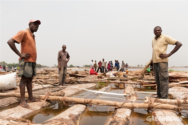Illegal timber from DRC