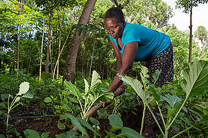 Ecological Farmer in Kenya. © Cheryl-Samantha Owen