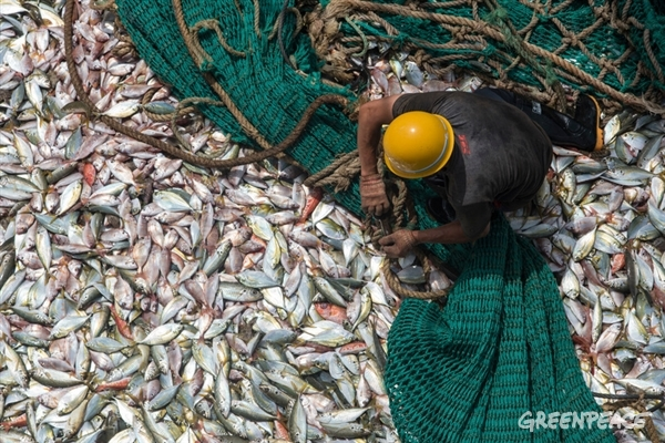 Fisherman on board the FU YUANG YU 380 Chinese fishing boat hauling the net. Greenpeace is on tour in West African waters to address the problem of overfishing in the region.
