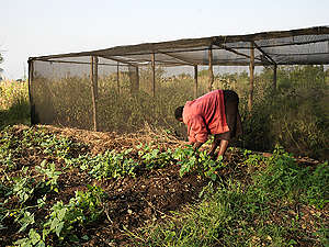 Ecological Farming in Kenya. © Peter Caton