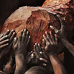 Greenpeace Afrique: «Le statut de protection de l'arbre Mukula est une bonne nouvelle pour la forêt de Miombo en Afrique»