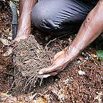 Greenpeace Afrique alerte sur le lancement de la phase 2 du Projet CongoPeat par la République du Congo