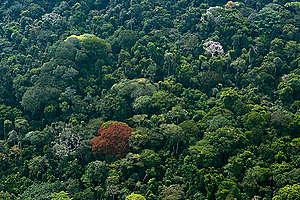 Peatland Forest in DRC. © Daniel Beltrá