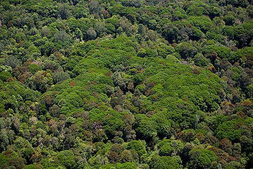 Peatland Rainforest in Sumatra. © Daniel Beltrá
