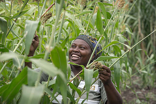 Building a resilient food system