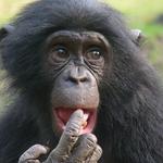 RDC : Greenpeace Afrique salue la condamnation pénale de trois trafiquants d'espèces sauvages