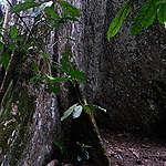 Les concessions forestières illégales doivent être urgemment annulées, Greenpeace Afrique