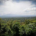 En plus de régler le problème d'énergie électrique, le Président Félix Tshisekedi doit protéger les forêts et les tourbières en RDC