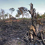 Greenpeace calls on Governments to act ahead of Fires hitting Africa's Rainforest
