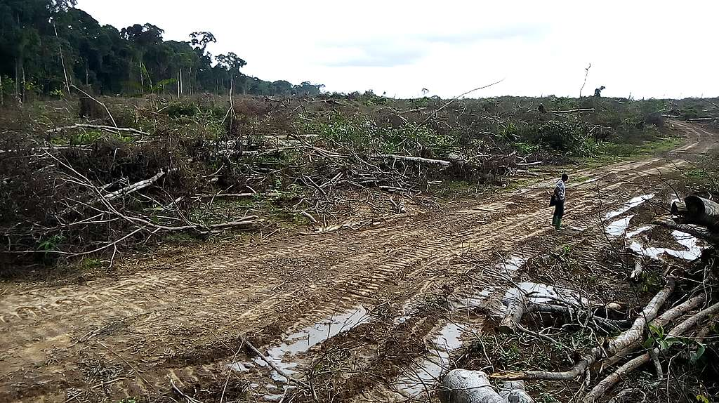 Large-scale illegal deforestation alleged near the village of Afan Essokié
