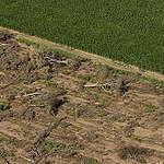 Chaco: Greenpeace denuncia que los desmontes ilegales están afectando un Parque Nacional