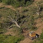 "Greenpeace: ""La Justicia escuchó el reclamo de la gente, ahora Peppo debe cumplir la Ley de Bosques"""