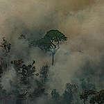 Greenpeace sobrevuela el Amazonas y documenta extensión y alcance del fuego