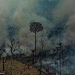 Cifras actualizadas: 2,5 millones de hectáreas quemadas en el Amazonas