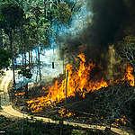 Cómo ayudar al Amazonas desde Argentina