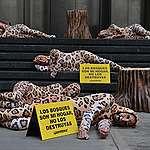 """Las empresas que destruyen bosques están matando al yaguareté"""