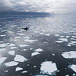 Más de 100 científicos remarcan la urgencia por la protección de los Océanos