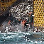 Mar Argentino: Grandes flotas pesqueras amenazan el hogar de la ballena franca austral