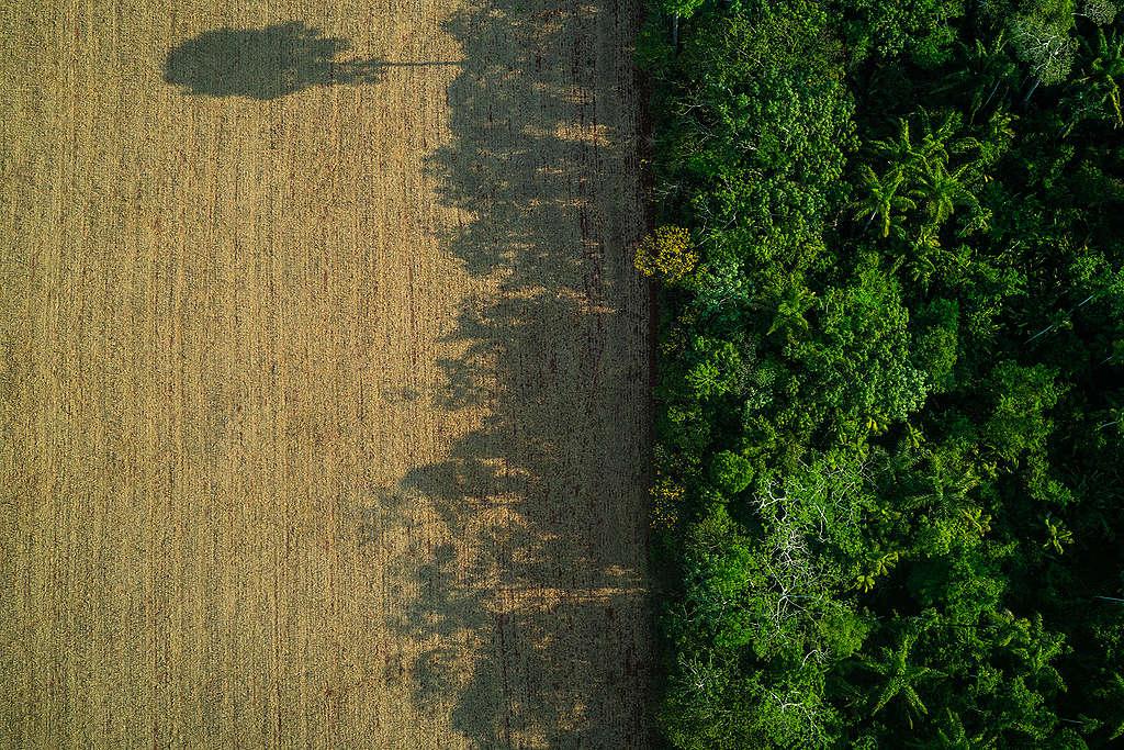 La deforestación aumenta en un 30%, equivalente a casi 10,000 km². © Fábio Nascimento / Greenpeace