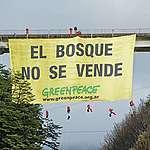 Los bosques de Villa La Angostura y San Martín de los Andes, en peligro