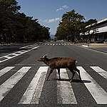 COVID 19: Animales en la ciudad. Animales sin hogar.