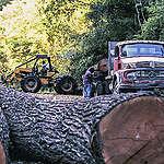 El trabajo de investigación: ¿cómo sabemos dónde están desmontando bosques en Argentina?