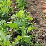 40% van de toegelaten pesticiden in Europa zijn erg gevaarlijk