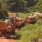 Du bois commercialisé par une entreprise belge qui sert les… conflits en Afrique