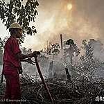 Faire confiance au RSPO, c'est donner un laissez-passer à la déforestation