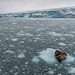 Le débat autour du climat est clos