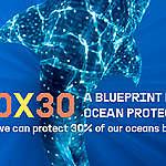 Onze oceanen beschermen dankzij een groot netwerk van zeereservaten
